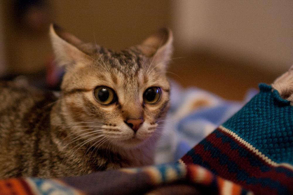 也让我有了专职的动物模特. 拍小猫和拍小孩儿一样,废片率很高.