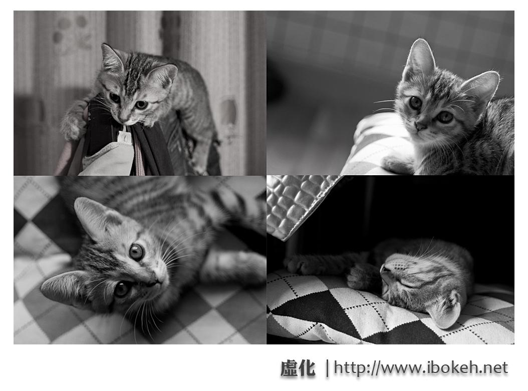 宠物摄影 摄影教程